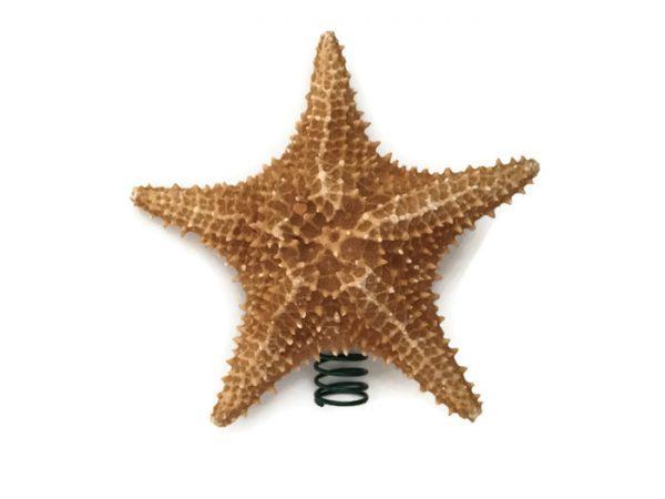 Caribbean Starfish tree topper