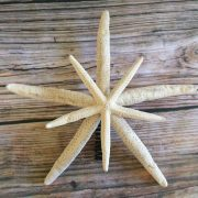 double-finger-starfish-tree-topper-3
