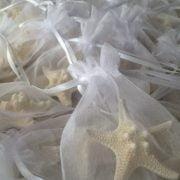 starfish-magnets2