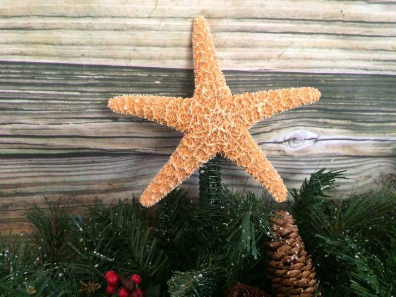 Bulk Starfish Decorations Sea 2 Land Designs Home