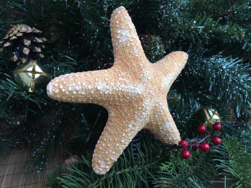 Tropical Jungle Starfish Christmas Tree Topper