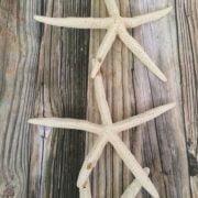 large-starfish-strand-5