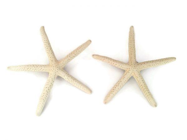 Finger Starfish Boutonnieres 2
