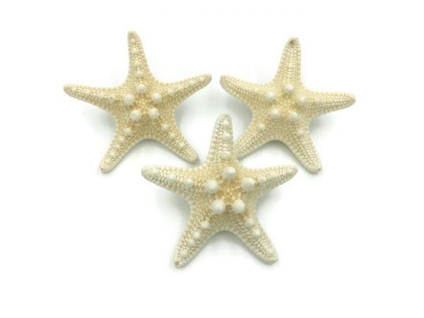 Knobby Starfish Boutonnieres 3