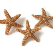 Sugar Starfish Boutonnieres 3