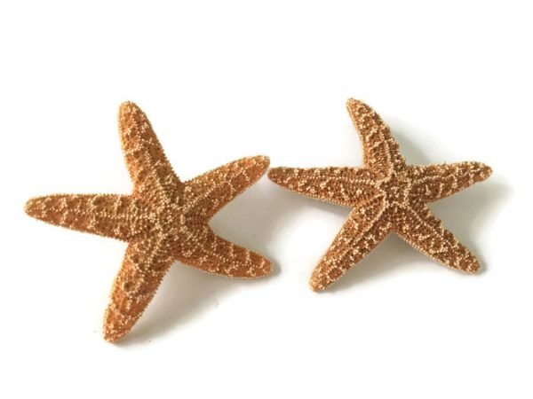 Sugar starfish boutonnieres 2