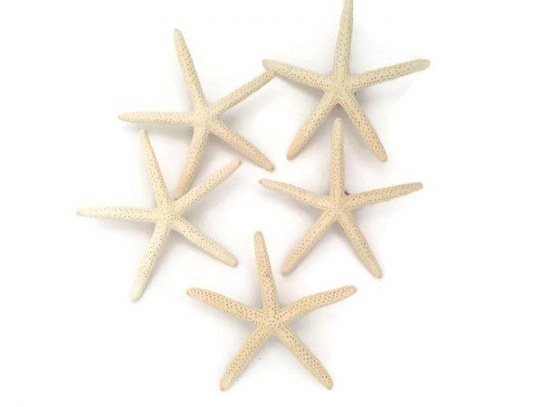 finger starfish boutonnieres 5