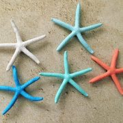 Colorful starfish Magnets