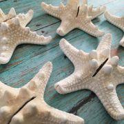 Starfish Place Card holders 1