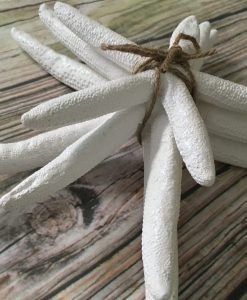 Starfish Bundle 2