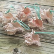 Murex seashell ornaments