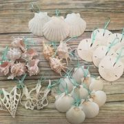 Shell Ornament Package 5