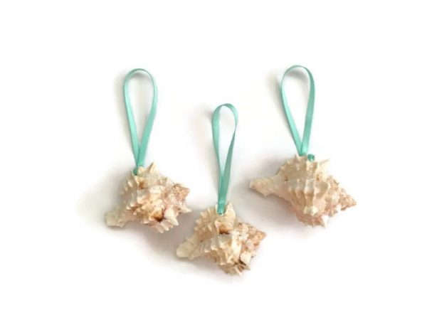 Mini-pink-murex-shell-ornaments-6