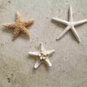 starfish magnetic boutonniere 6
