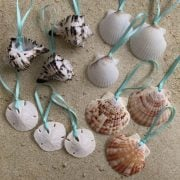 Mini Seashell Ornament Package