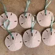 Medium Natural Sand Dollar Ornaments