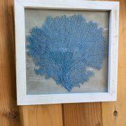 Blue Sea Fan Wall Art