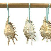Lambis seashell ornaments, natural 2