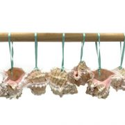 Natural Pink Murex Ornaments