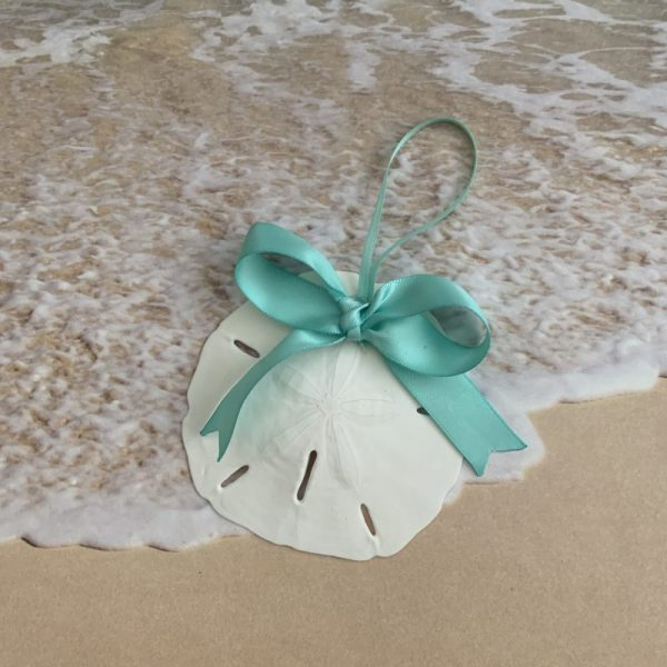 Natural Sand Dollar Ornament with Turquoise Bow