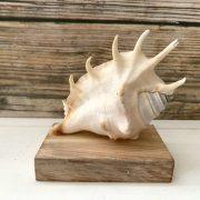 Mini Lambis Lambis Seashell Statue 1