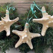 knobby starfish 1