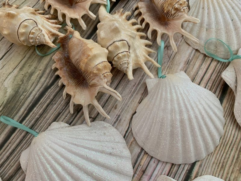 Large Seashell Christmas Ornament Package | Sea 2 Land Designs