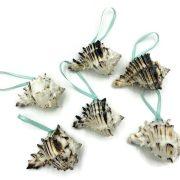 Tropical Murex Seashell Ornaments 4