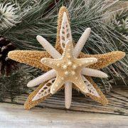 Sugar with Seashells and Knobby Starfish 3