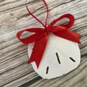 Natural SAnd Dollar with Red Bow 1